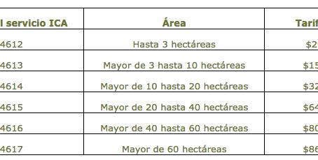 Requisitos para exportación de aguacate hass desde Colombia