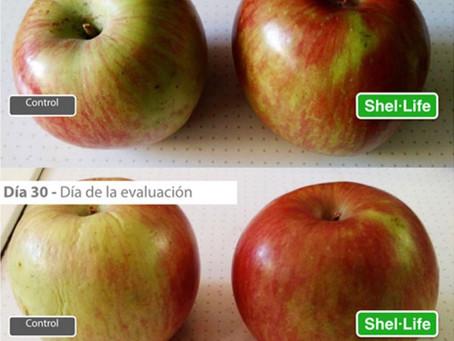 Innovador proyecto de recubrimiento comestible natural y orgánico permitirá extender la vida útil de