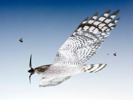 Dron con forma de ave rapaz llegará a Latinoamérica a proteger cosechas