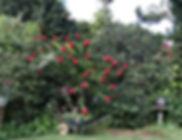 Garden 6 (1).JPG