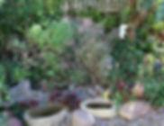 Garden 5 (3).JPG