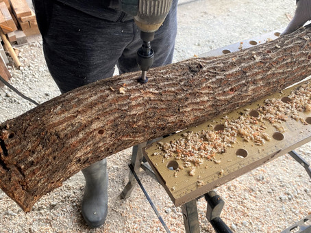高家産原木クヌギにシイタケ菌を植えました^^