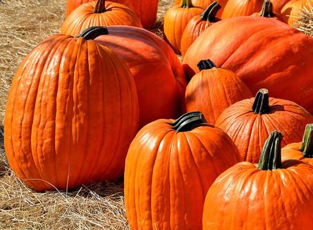 Calabasas Pumpkin Festival!