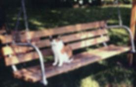 wood-bench.jpg