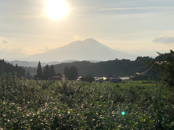 農園から見える岩手山