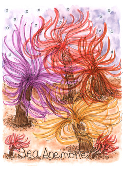 Sea Anemone.jpg