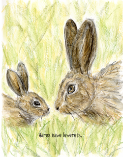 Hares.png