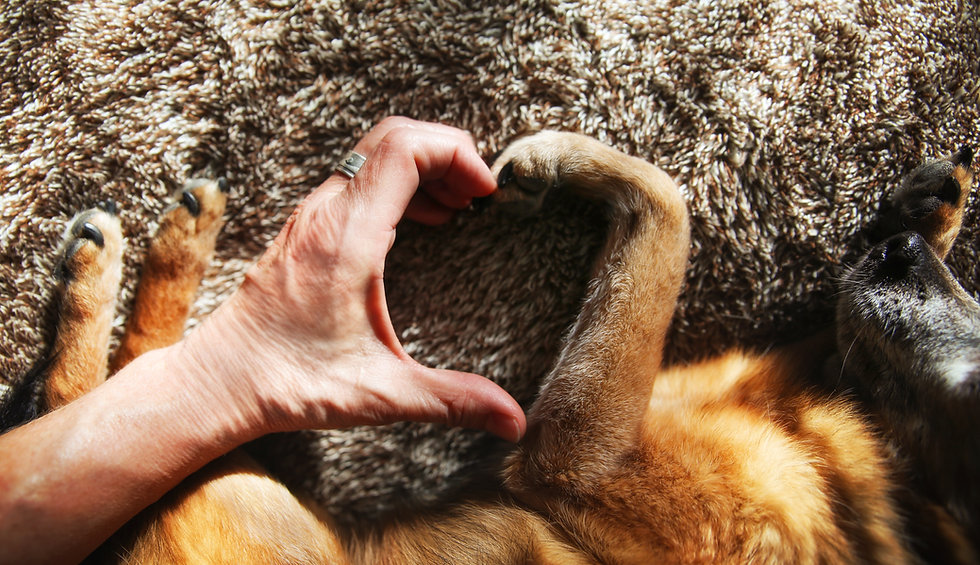 Human hand anddog paw making a heart