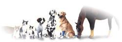 animals_banner