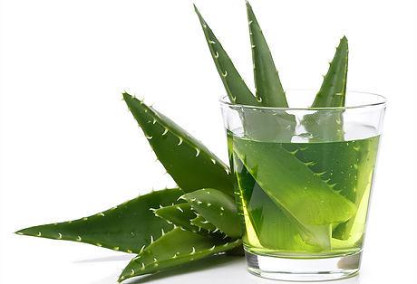 Aloe Vera in water glass