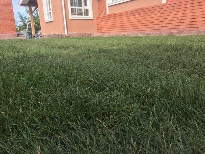 Рулонный газон в Кайгородово
