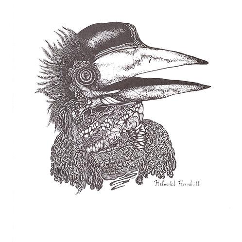 Artprint -Helmeted Hornbill*