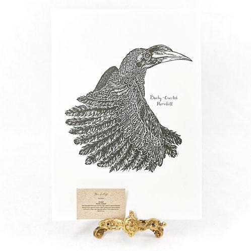 Artprint -  Bushy Crested*