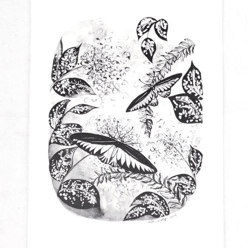 Artprint -Brookiana*