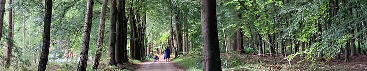 Flyer%20Wandeltherapie%20foto_edited.jpg