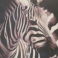 Zebra Express Events