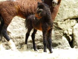 Namib Foal