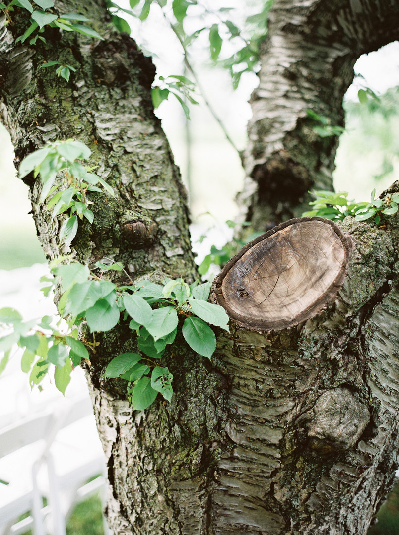 0025-When-He-Found-Her-Vineyard-Wedding-