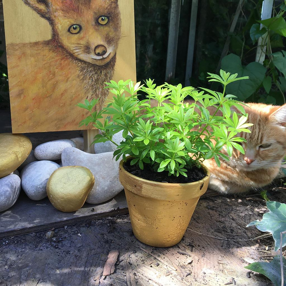 Belle, a cat sitting in the greenhouse with the forget-me-not paintings