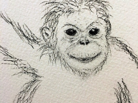 Orangutan Advent