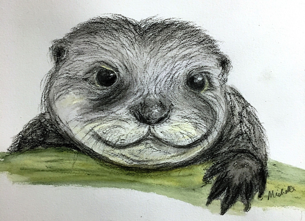 Otterly Lovely in charcoal, watercolours and ink by Michelle Thomasson
