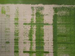Weed Control Crop Trial