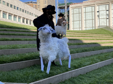 Sheep at Lincoln Center part of Restart Stages  By Basil Twist  May 2021