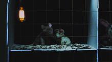 The Cure  Short film directed by Arlen Konopaki