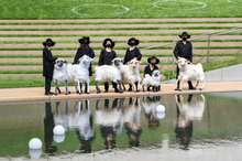 Sheep at Lincoln Center part of Restart Stages  By Basil Twist  May 2021  Photo by Richard Termine