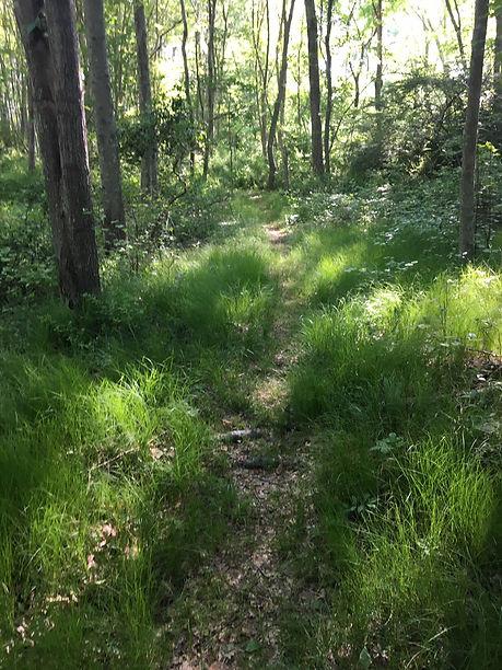 Boggy Hole Trail.jpg