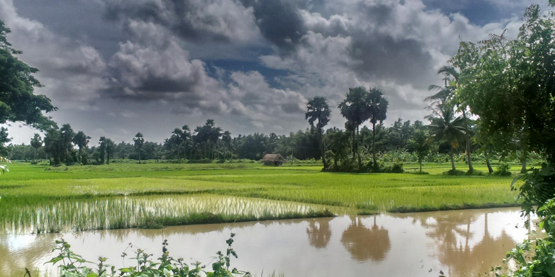 Fields-of-Odisha.jpg