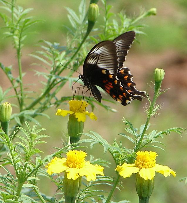 Butterfly Charm.jpg