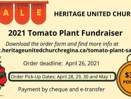 Tomato Plant Fundraiser