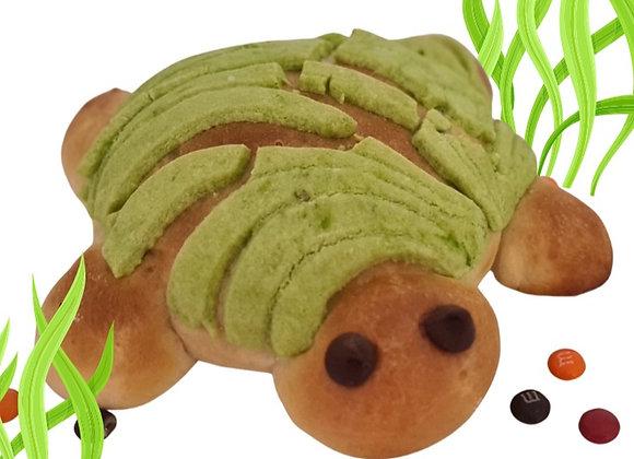 concha tortuga