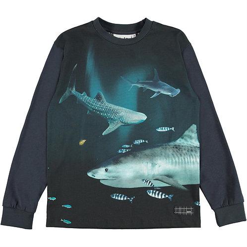 """Rexton"" T-shirt Molo"