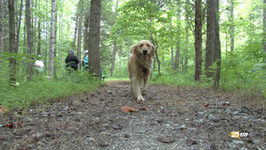 Leash-free dog park in Henry County now open