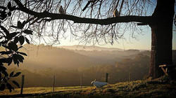Monday morning paddock sunrise with some