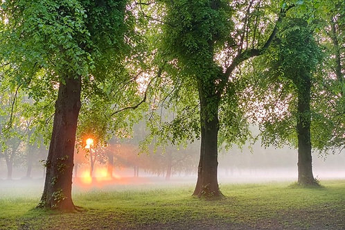 Dawn's Fire - Canvas Image of Marbury Park - Tree Photography