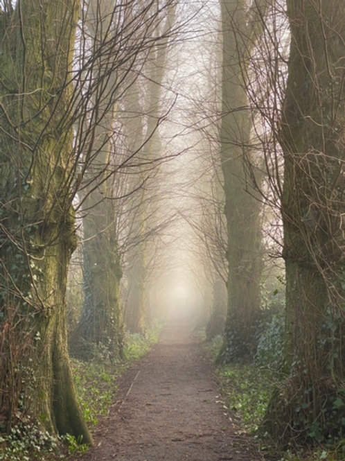 Mysterious Avenue of Trees  - Great Budworth - Canvas Image