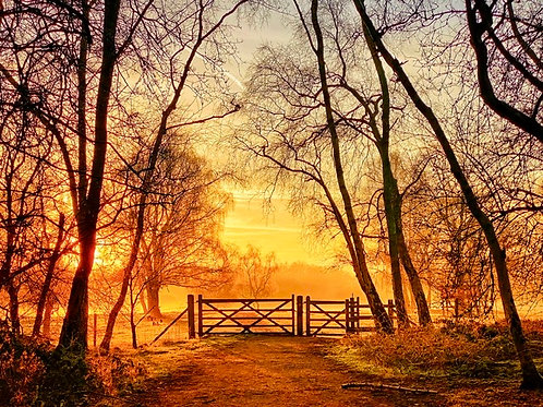 The Gate - Canvas Image of a Stunning Sunrise in Marbury Park