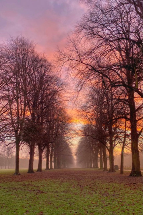 Great Gig In The Sky - Canvas Image of The Avenue of Trees, Marbury Park