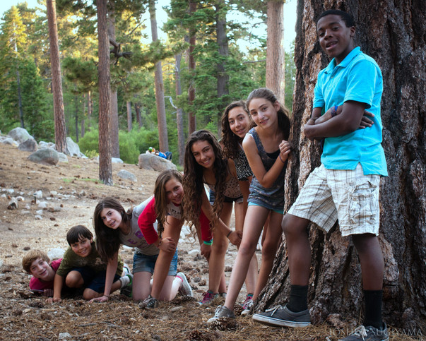 Trees Around Camp