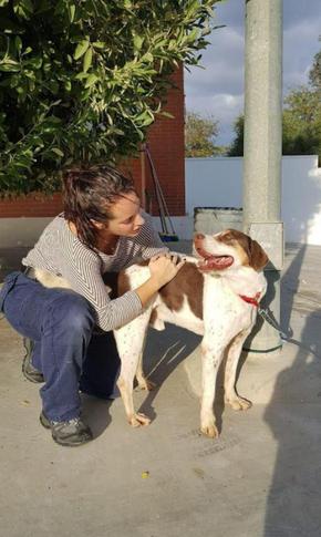 Bolo - mix chien de chasse - mâle