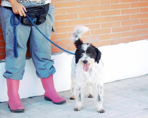 Rocco - mix chien d'eau - mâle