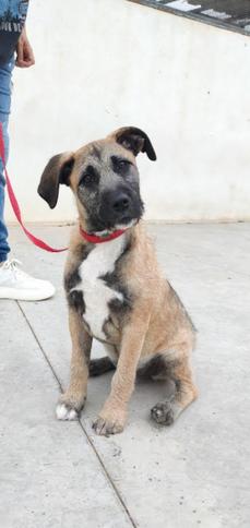 Fiona - chien des rues espagnol - femelle - en cours d'adoption