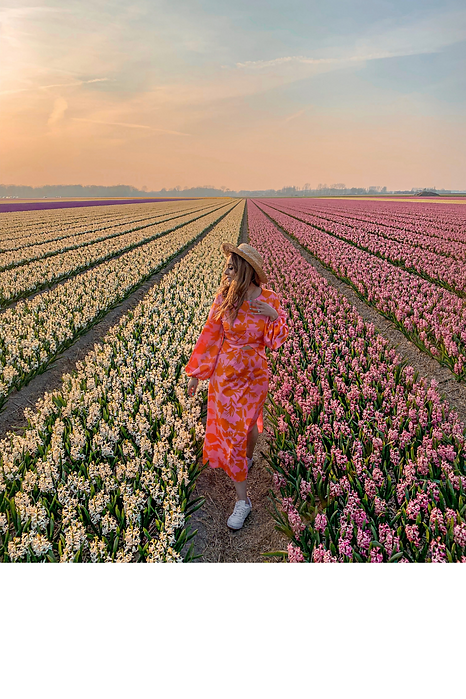 tulip_fields_holland