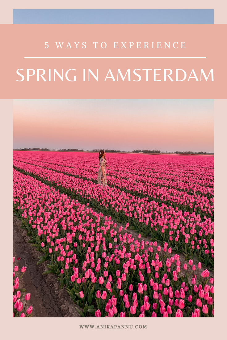 what is the best time to see tulip fields in amsterdam, where are the tulip fields in amsterdam, tulip fields amsterdam, tulip season amsterdam 2020, keukenhof tulip gardens, lisse tulip fields, spring months amsterdam, where to see flowers amsterdam, flower markets amsterdam, tulp festival amsterdam, wisteria, instagram places amsterdam
