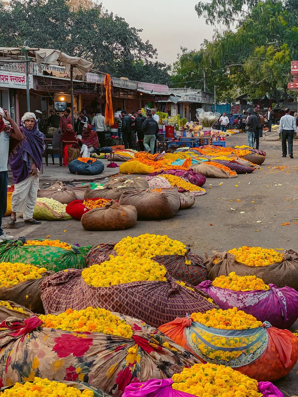 jaipur flower market, jaipur hidden gems, jaipur wholesale flower market, jaipur morning market, vegetable market jaipur, must visit jaipur, non tourist things to do in jaipur, jaipur secret gems, jaipur photography