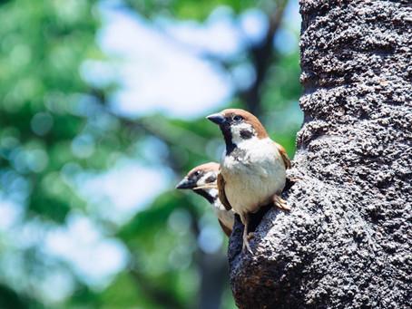 Mental Health Awareness week! Monday 10th May - Sunday 16th May: Introducing nature into your life.