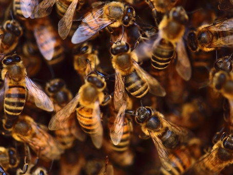 5 Tips for Leaders to take from Bumble and the Hive!